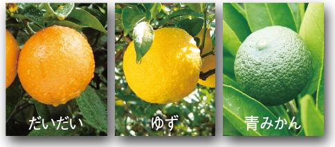 柑橘.png